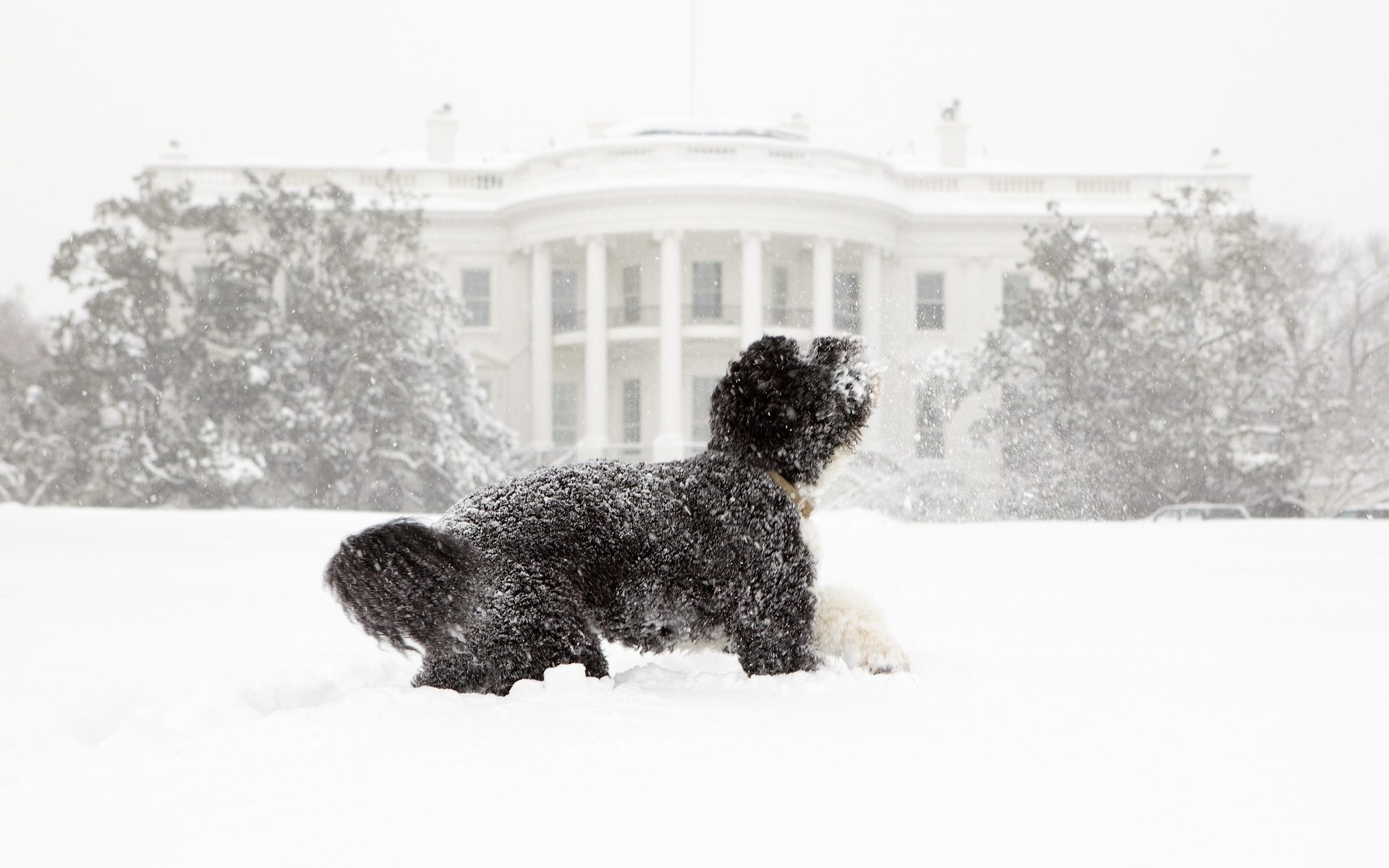 Dog in snow in front of the White House.